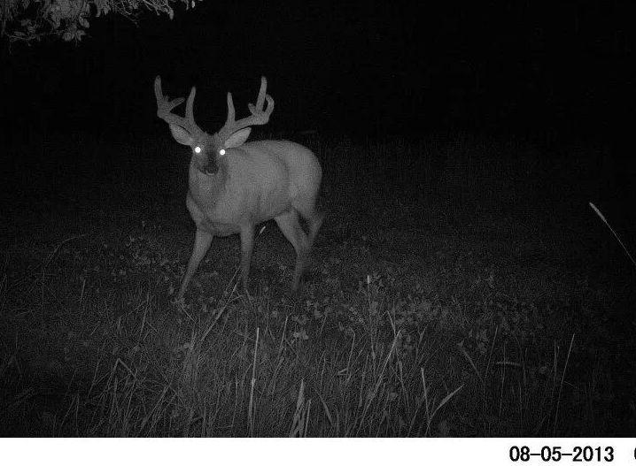 Ohio Old No 7 Buck Big Deer