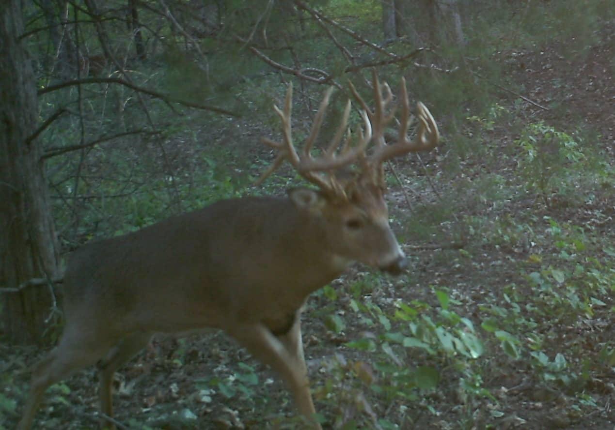 Big Deer
