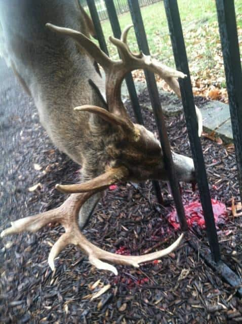 December 2013 Big Deer Page 2