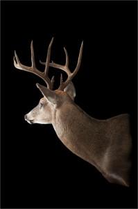Matt's 2013 Kentucky Archery Buck