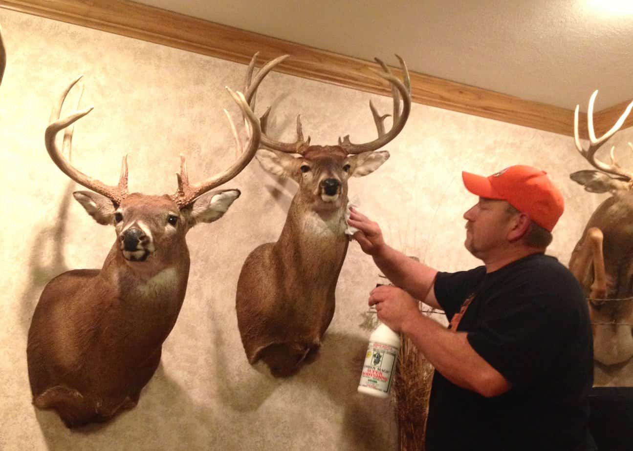 How To Care For Your Deer Mounts Big Deer