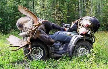 Hardest Working Atv For Hunting Big Deer