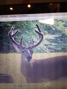 trail cam ky 2