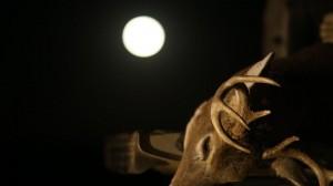 full moon buck compress