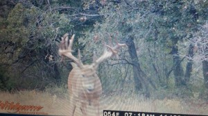 OK monster buck 2