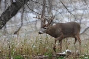 sioux falls south dakota buck