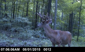 IN dagger trail camera buck 3