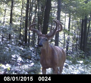 In dagger trail camera buck 2