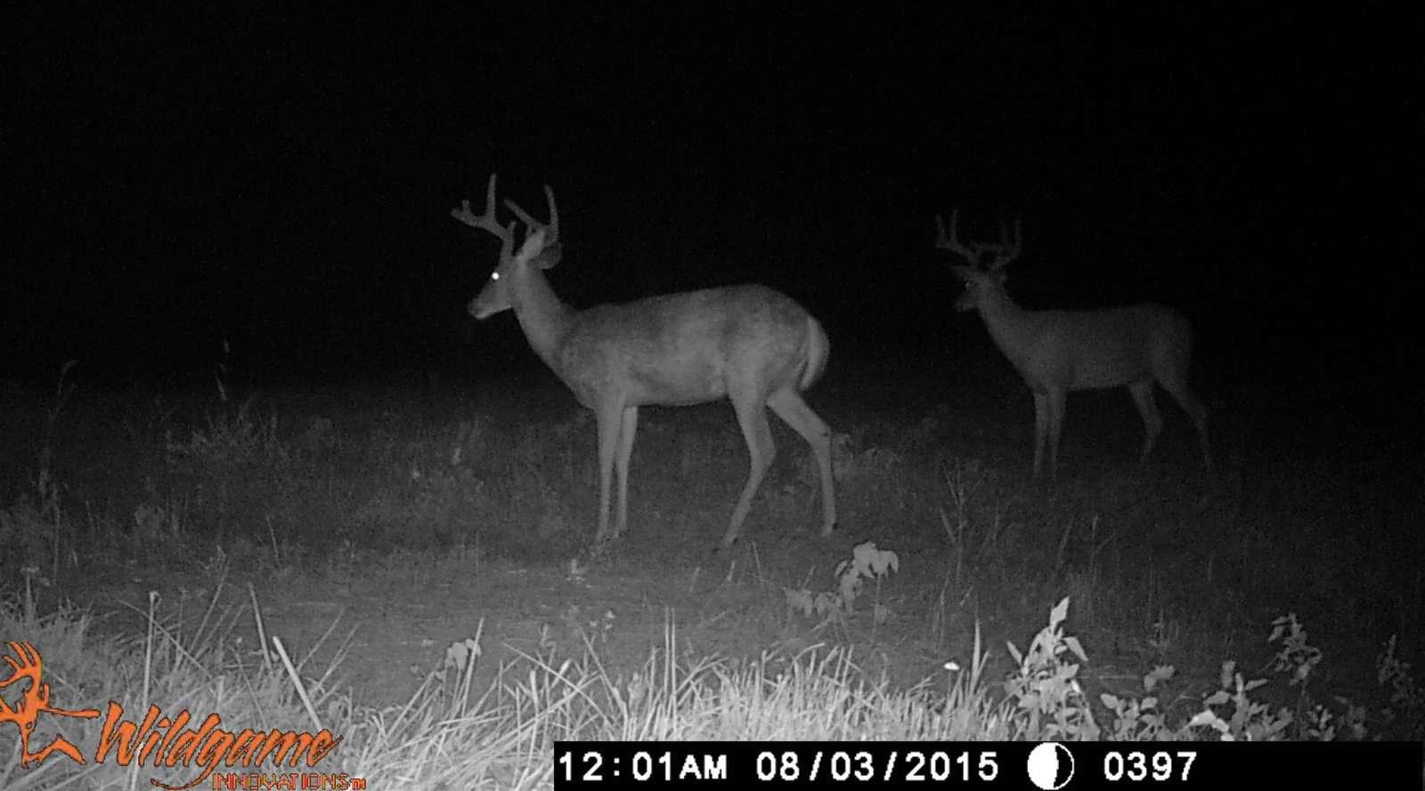 Trail Camera Photos | Big Deer | Page 6