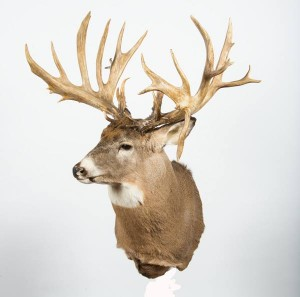 bc smith buck