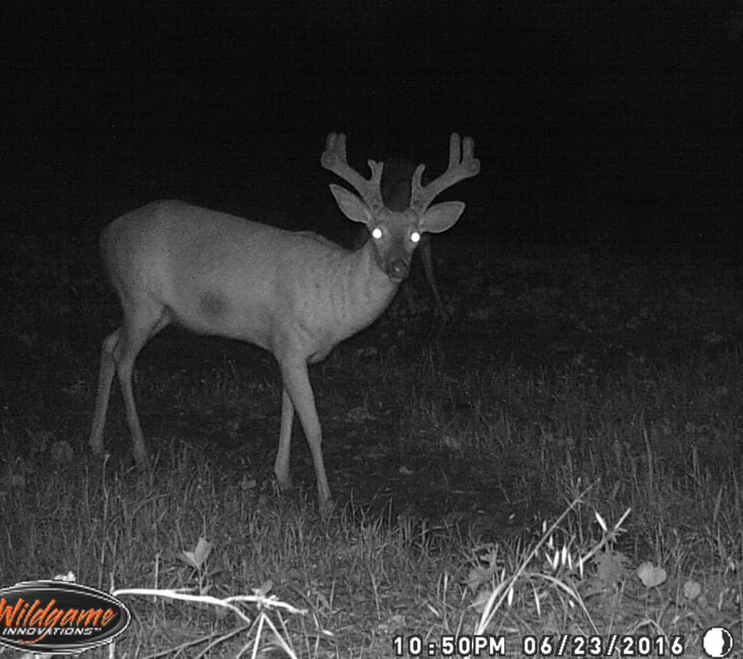 trail camera photos big deer page 6