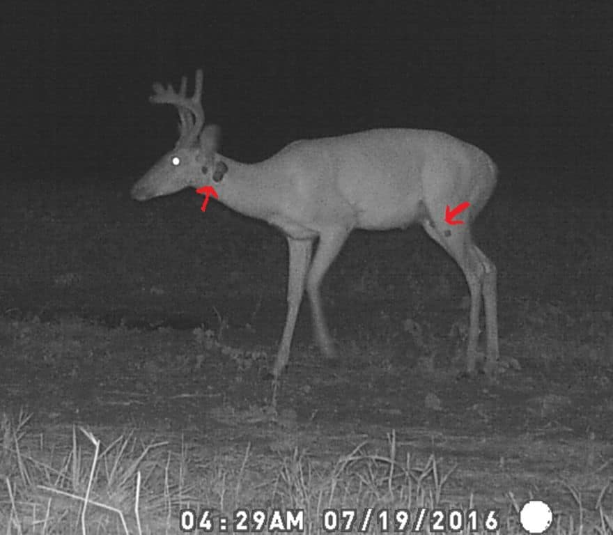 Trail Camera Monday | Big Deer