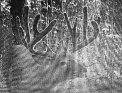 Trail Cam: How To Get Buck Pictures If You Can't Use Corn Or Minerals