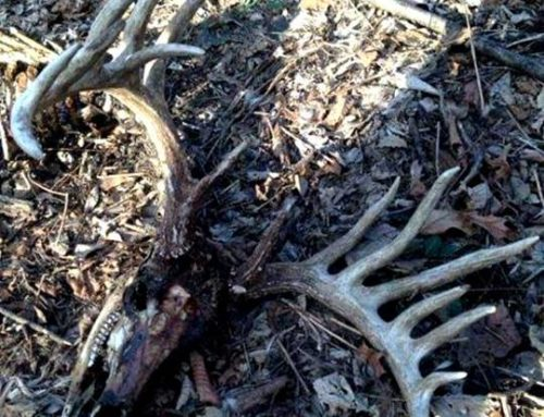 "What Is A ""Deadhead"" Buck?"