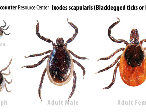 7 Tips To Prevent Tick And Mosquito Bites