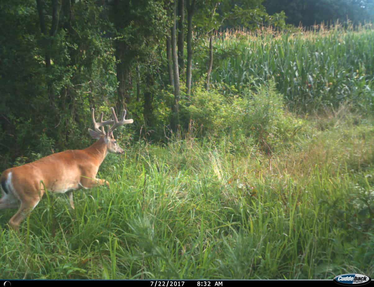 feeder plot food flat deer goin traps fence fencing out system hog
