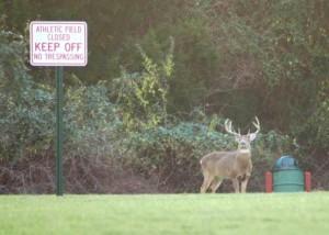 soccer field VA buck