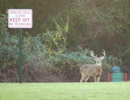 3 Things To Remember When Hunting Suburban Deer