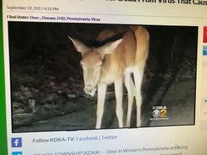 edh pa deer
