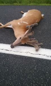 va buck hit may