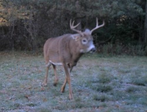 6 Things To Remember When Hunting Public-Land Bucks