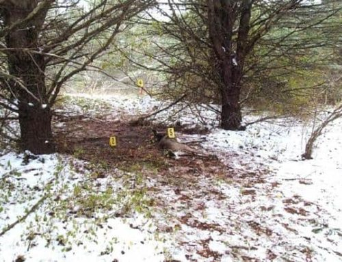Michigan: Poacher Gets 5 Years In Prison For Killing Hunter