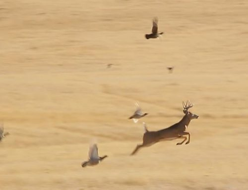 What Is The Biggest Mistake Deer Hunters Make?