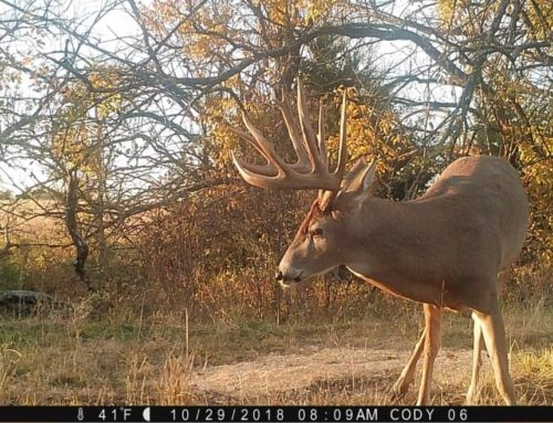 "Kansas: 3-Year Quest For 200-Inch ""Athos"" Buck"