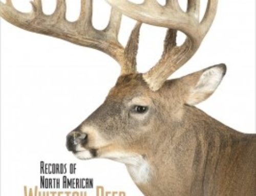 UPDATE: Top 5 States For Boone & Crockett Whitetail Bucks