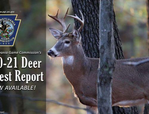 2021 Pennsylvania Deer Harvest Tops 400,000