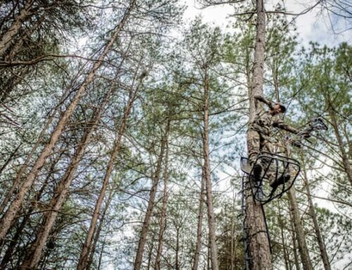 4 Spots To Hang a Tree Stand In October